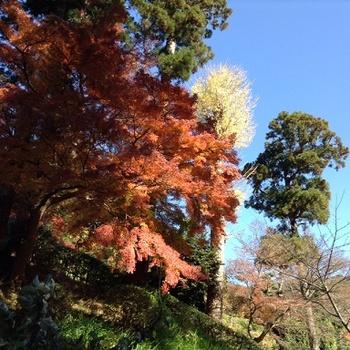 鎌倉8.jpg